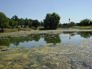 harmful-algae-blooms-300x224